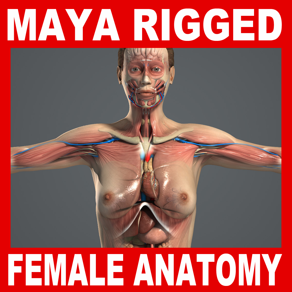 rigged complete female anatomy 3d model