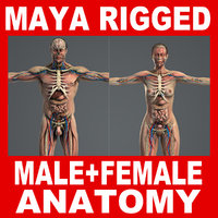 MAYA RIGGED Male and Female Anatomy Complete Pack (Textured)