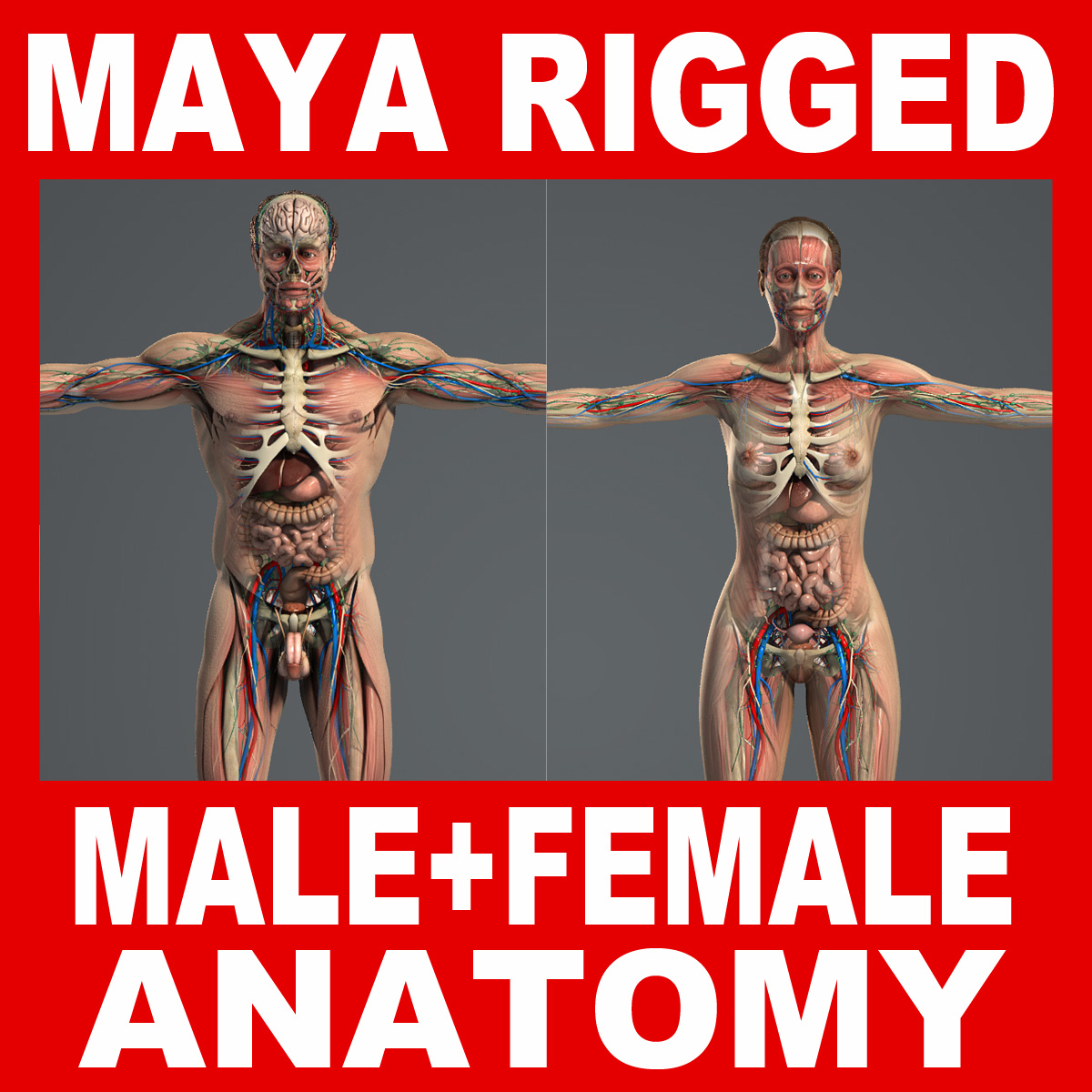 rigged complete male female 3d 3ds
