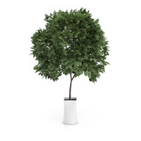 small tree white pot c4d