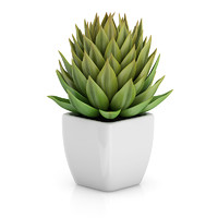 small plant white pot 3d model