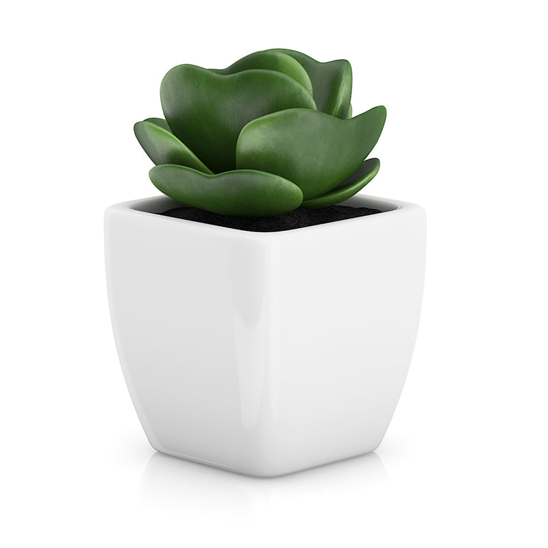 small plant white pot