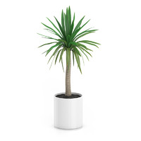 Palm Tree in Round Pot 1