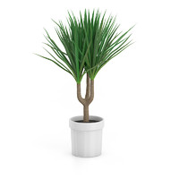 palm tree pot 3d model