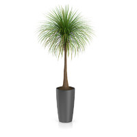 3d palm tree pot