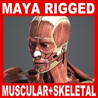 MAYA RIGGED Muscular & Skeletal Systems Anatomy 3D Model