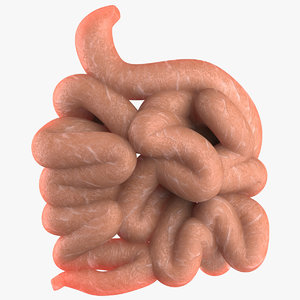 3d model large intestine