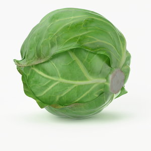 3ds max realistic cabbage real vegetables