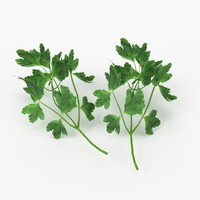 Realistic Parsley