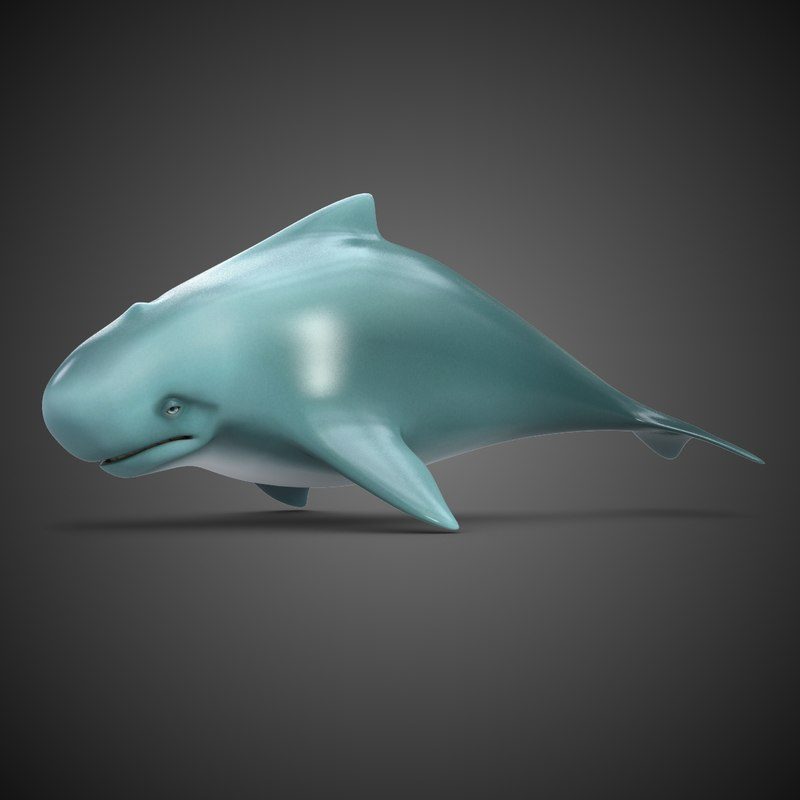 3d cartoon whale