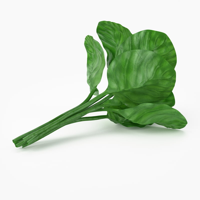 c4d realistic spinach real