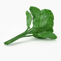 Realisitc Spinach