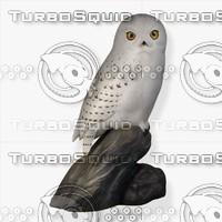 obj snowy owl fg