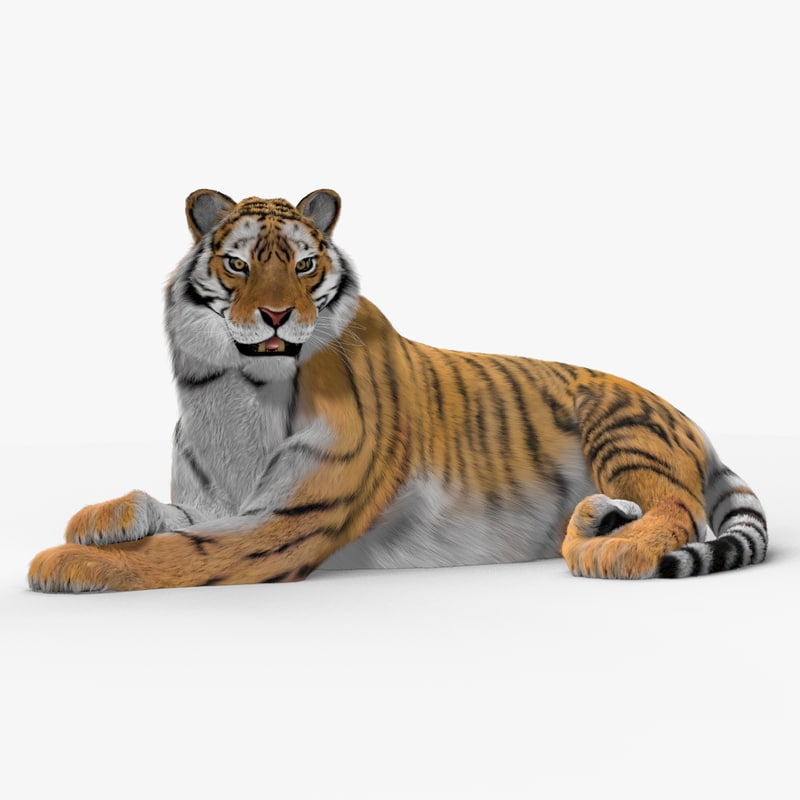 max tiger cat fur animation