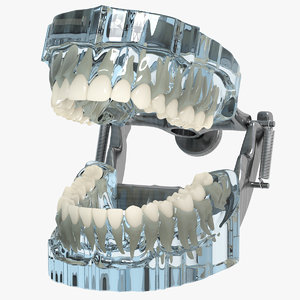 3d realistic typodont
