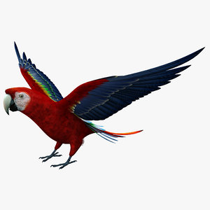 max scarlet macaw