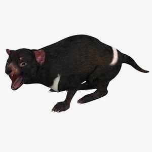 tasmanian devil pose 3 max