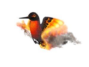 max hummingbird