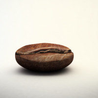 3d coffee bean model