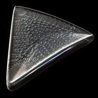 free max model protist diatom