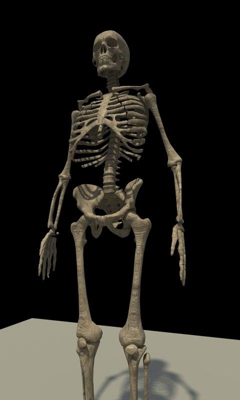 anatomical skeleton anatomy 3d max