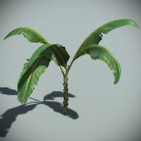 banana plant max