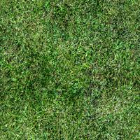 grass_8