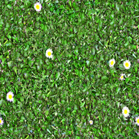 grass_9