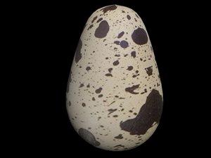 3d quail egg