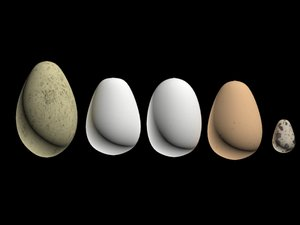 set egg 3d model