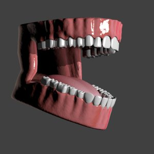 3d model human mouth
