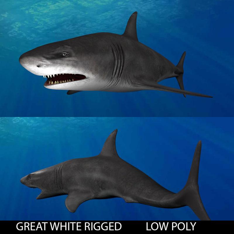 3d shark great white model
