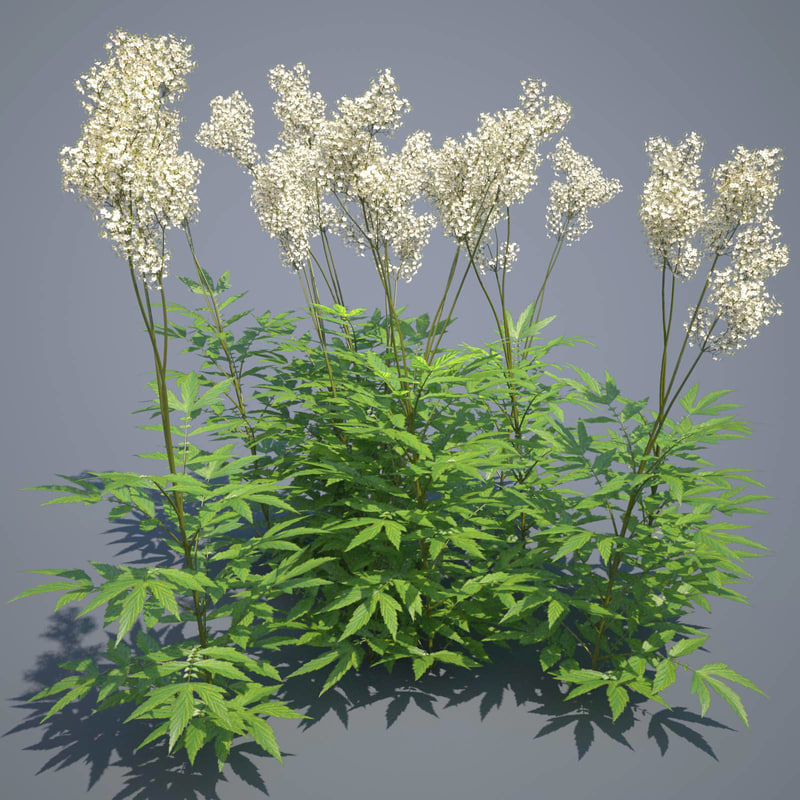 3d meadow meadowsweet grass