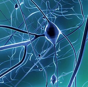 3d neuron nerve synapses