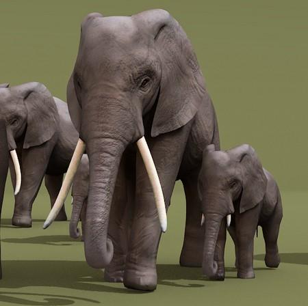 african elephant blend