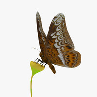 Animated Tiger Butterfly