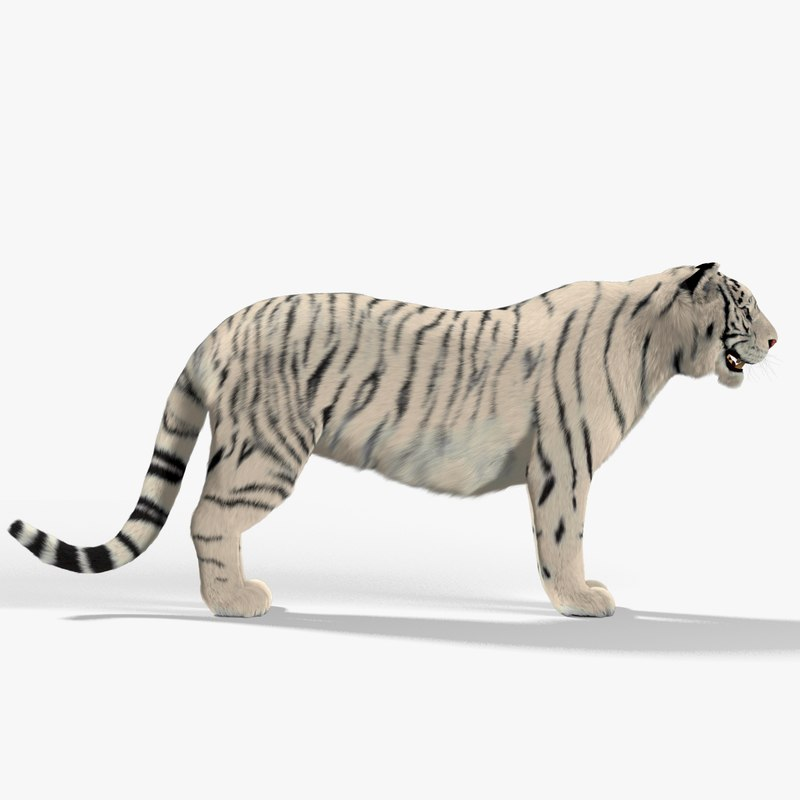 white tiger fur max