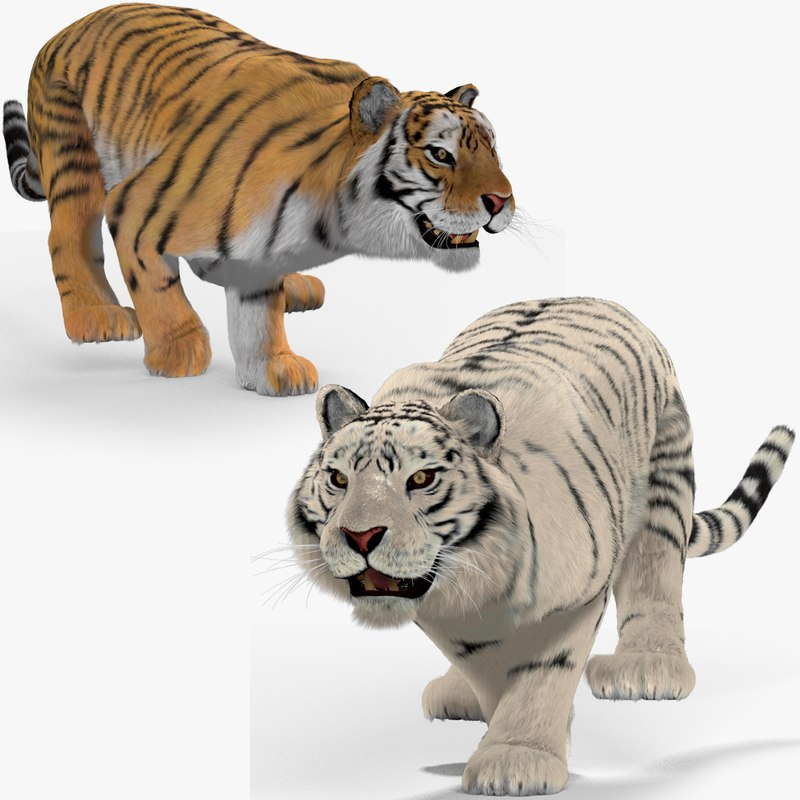 tigers fur cat animation 3d max