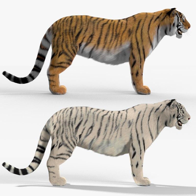 max tigers fur