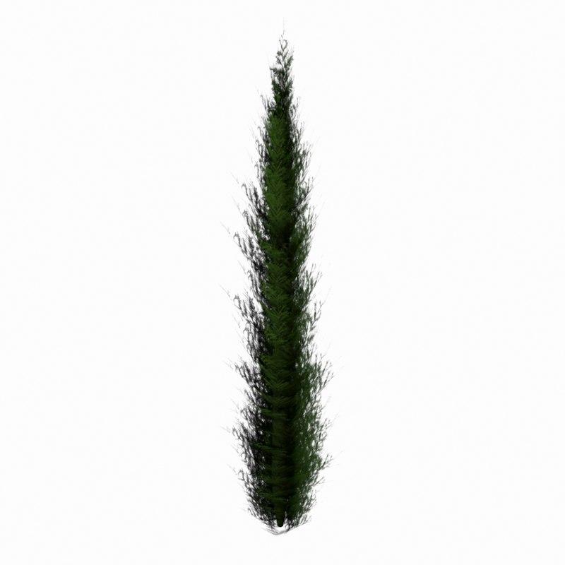 optimized cypress tree 3d model