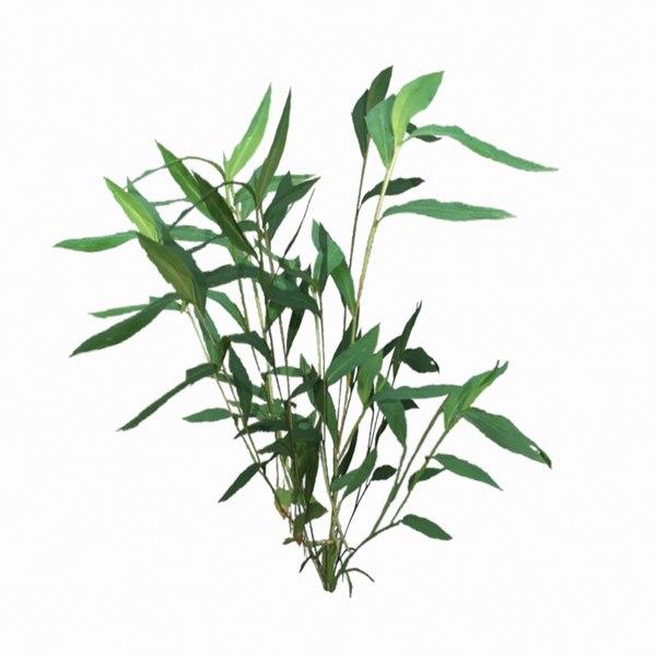 3d optimized stilt grass plant model
