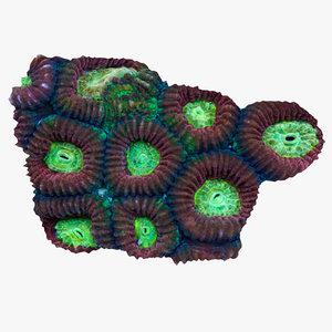 3d model favia coral