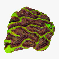 platygyra coral 3d max