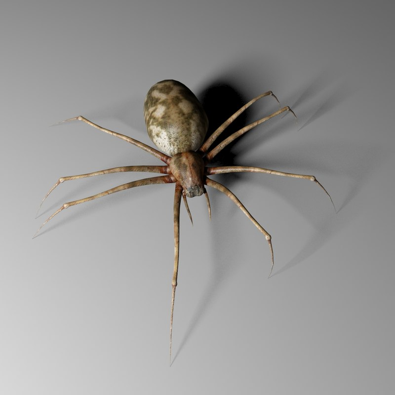 3d realistic spider model