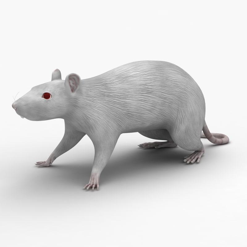 Dugm01 Rat Anatomy Male Max