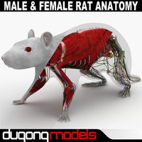 Male & Female Rat Anatomy Textured