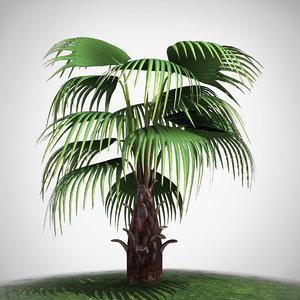 fan palm max