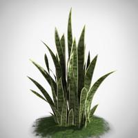 3d model sansevieria plant