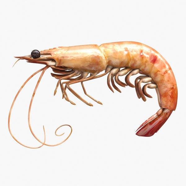 shrimp 3ds