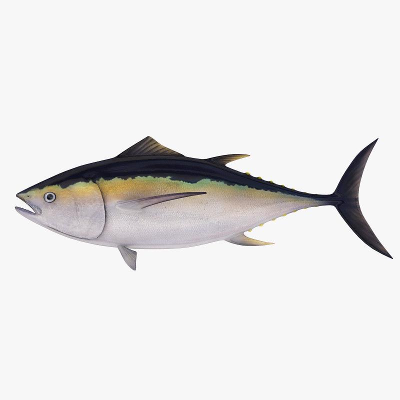big eye tuna max